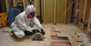 Mold Damage Restoration Mold Removal Process
